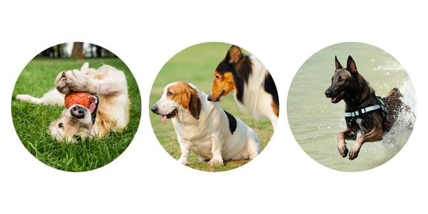 dog-mix-categories-800x400